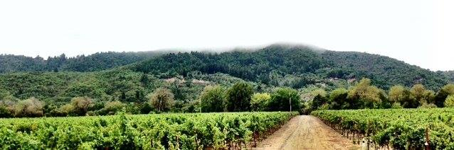 Fog over the vyd 9_10_13